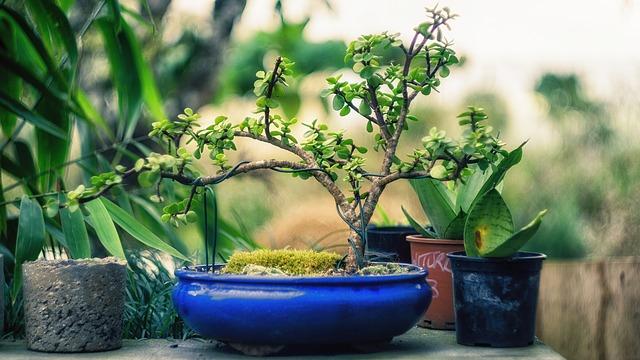 modrá bonsai