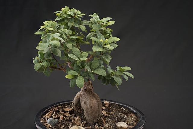 strom-bonsai