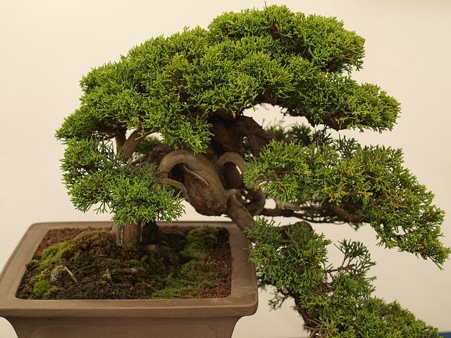 miniaturní bonsai